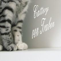 Kleine feine junge Hobbyzucht der British Kurzhaar in Black-Silver-Tabby, liebevolle Aufzucht in der Familie. Kitten mit besonders hübschem, ausdrucksvollem Gesicht! Top Stammbaum. Besuch jederzeit nach telefonischer Absprache: 06541-811123.